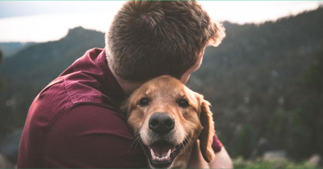 5 consejos para que las adopciones virtuales de animales sean un éxito