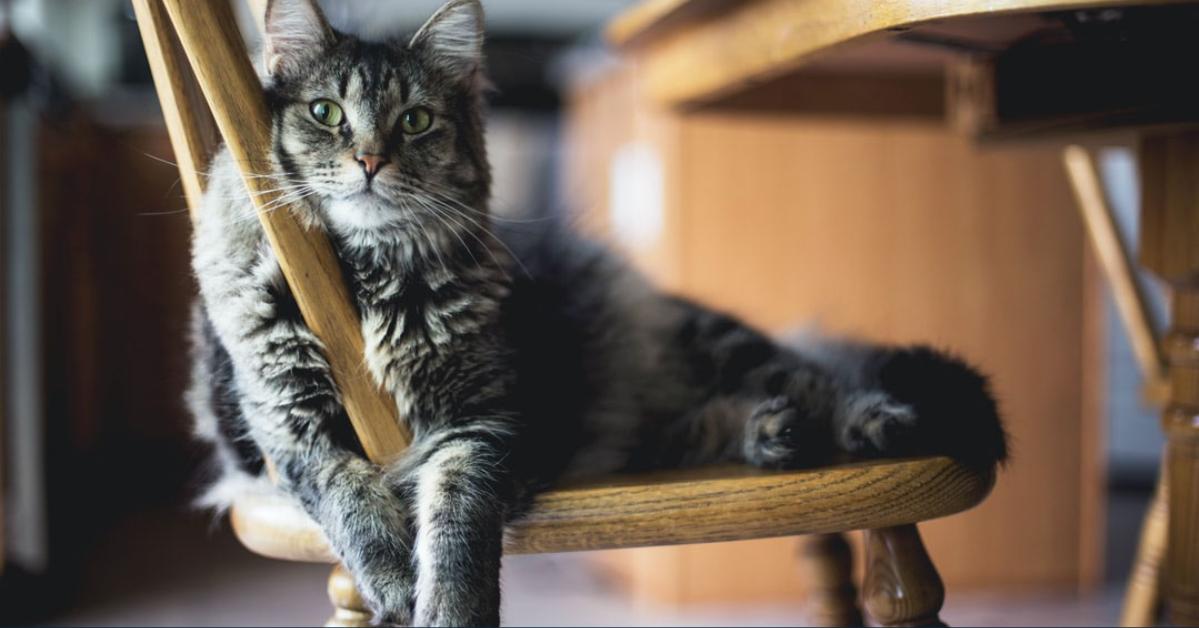 Problemas relacionados con la separación en gatos