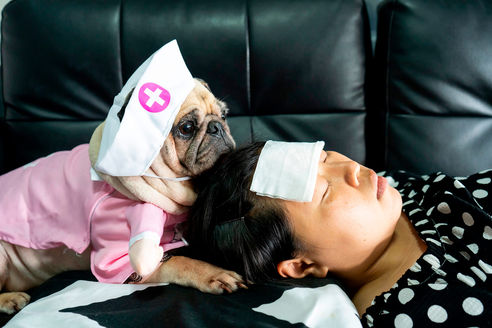 Sobre el vínculo humano-animal durante la crisis del coronavirus