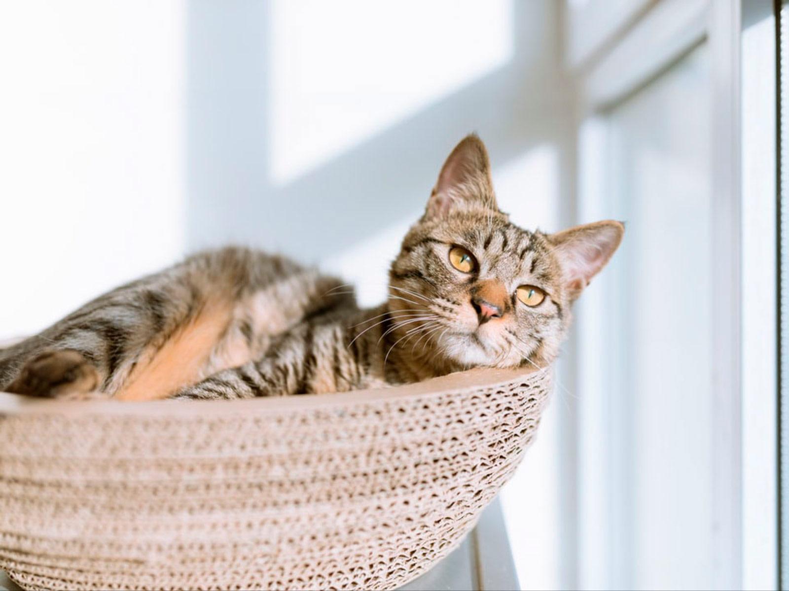 Sobre gatos y coronavirus