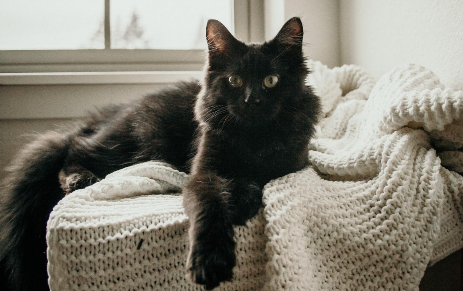 Los aceites esenciales cómo pueden ayudar en tus gatos