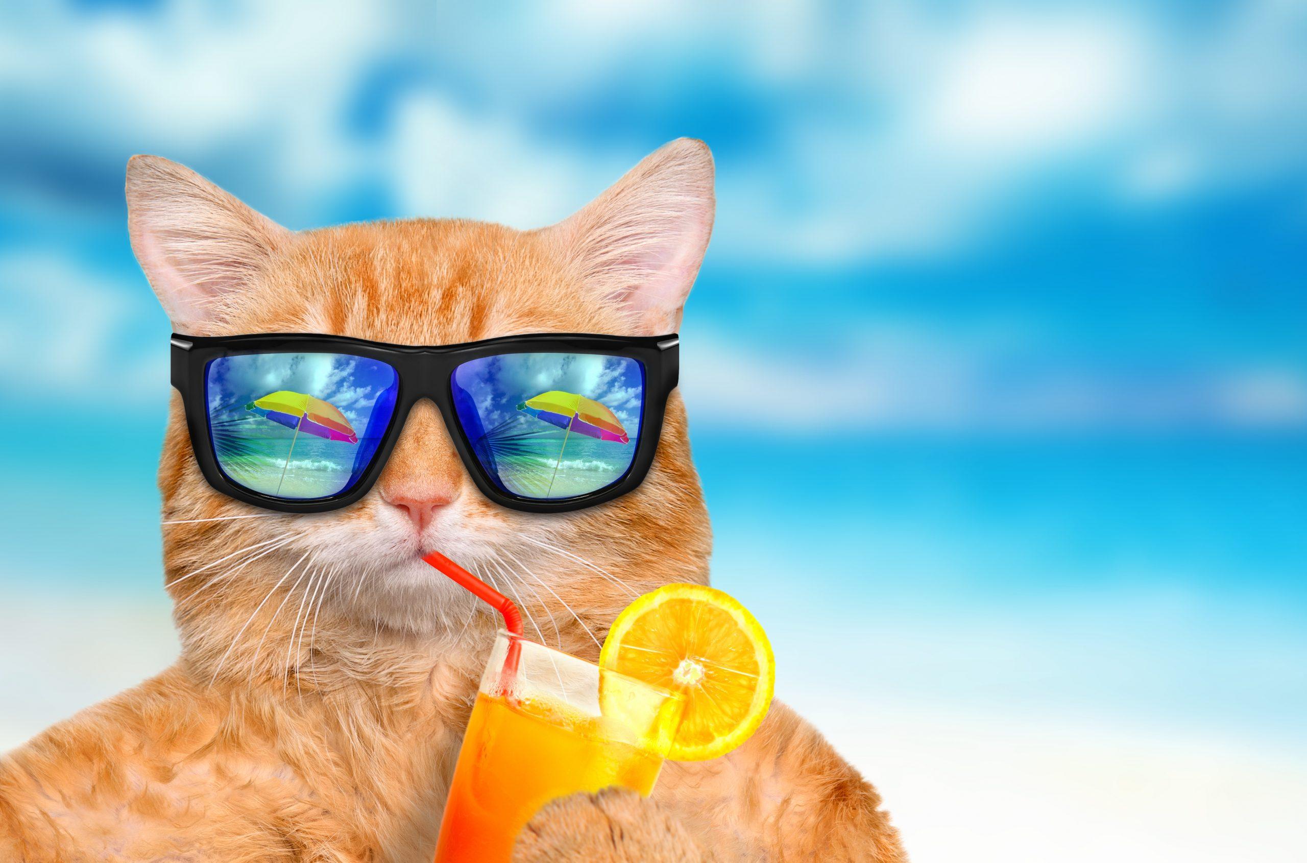 HAPPY TRAVEL CAT – GATOS Y VACACIONES