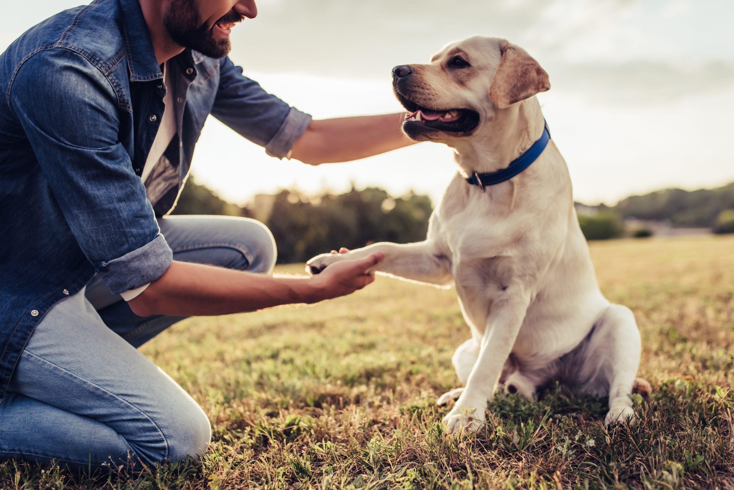 El bienestar en perros de Intervención Asistida